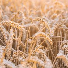 Майбутнє України—за аграрним сектором економіки.