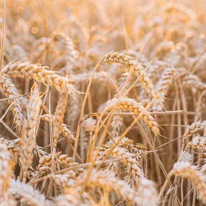Будущее Украины-за аграрным сектором экономики.